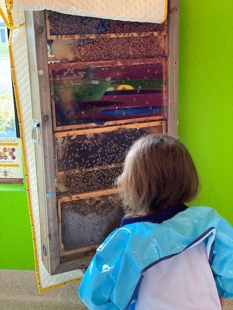 Mr. Noodles Bee Hive